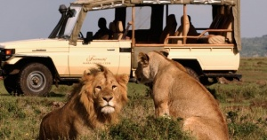 Go Wild - Safari Travel